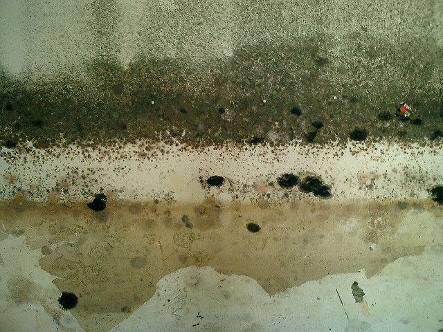 mold formation